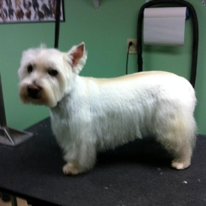 Coventry Animal Hospital Grooming Photos