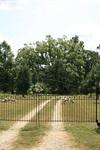1800 Magnolia Plantation - 2